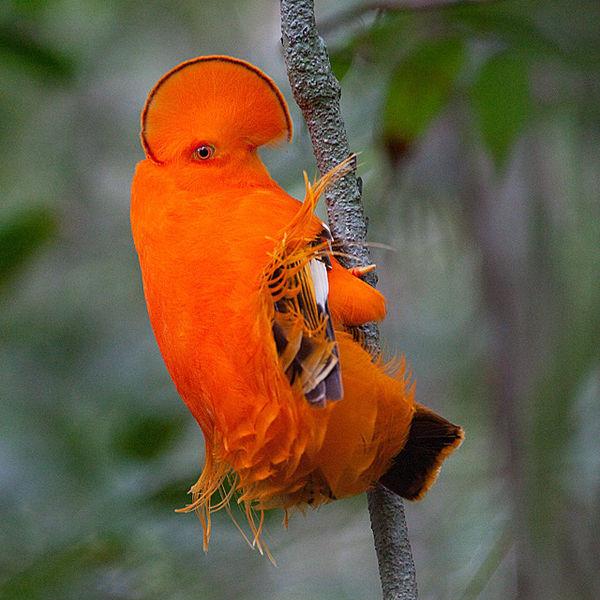 Sites ornithologiques 11305c74
