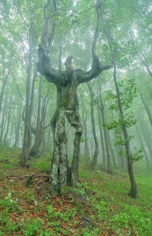 Bien-aimé nature et paysages insolites ZN22