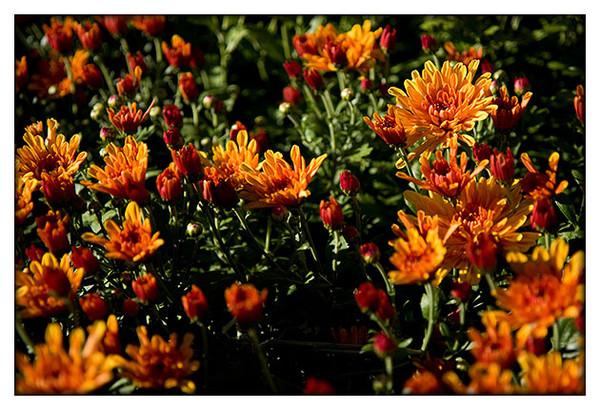 Automne et ses couleurs page 5 for Fleurs automne