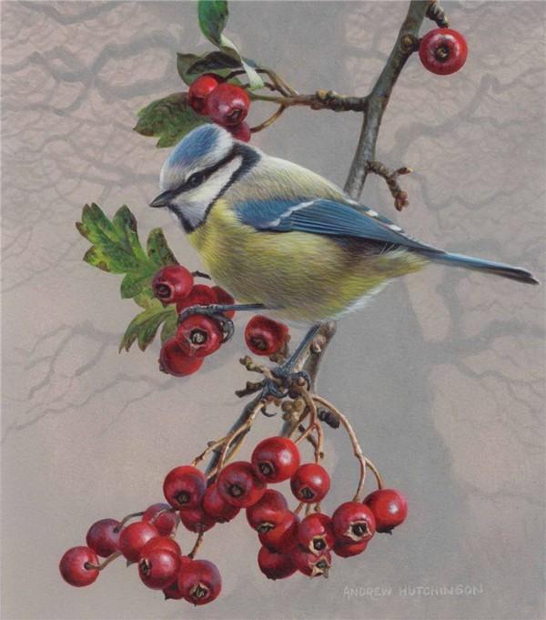 Superbe peinture d'oiseaux