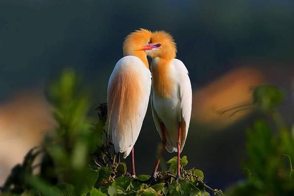 Sites ornithologiques 33a49ba0
