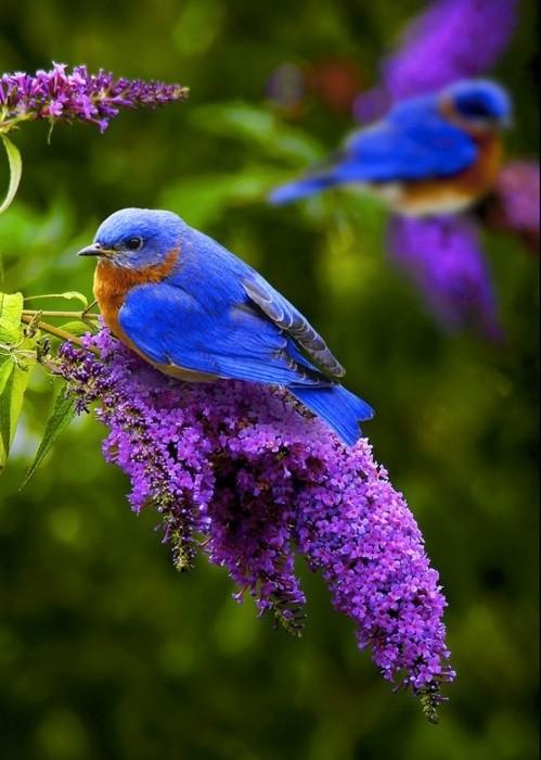 Superbe image d'oiseaux