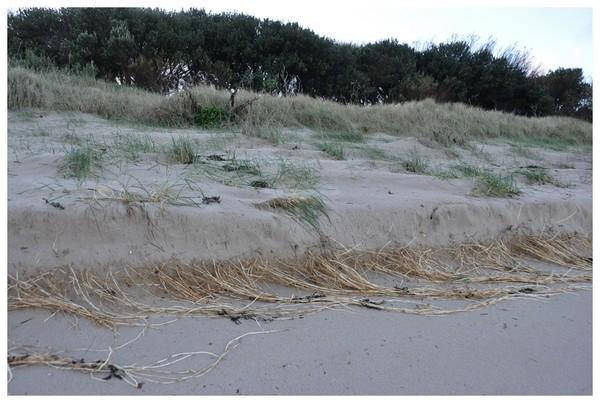 Plage de Basse Normandie (Manche)