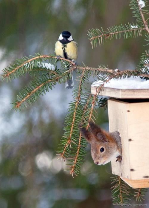 Belle image d'ecureuil