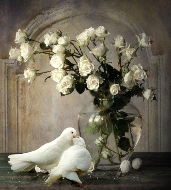 pigen et roses