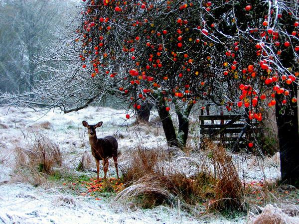 Les images de Noël (Paysages et illustrations féeriques) 5cdff85e