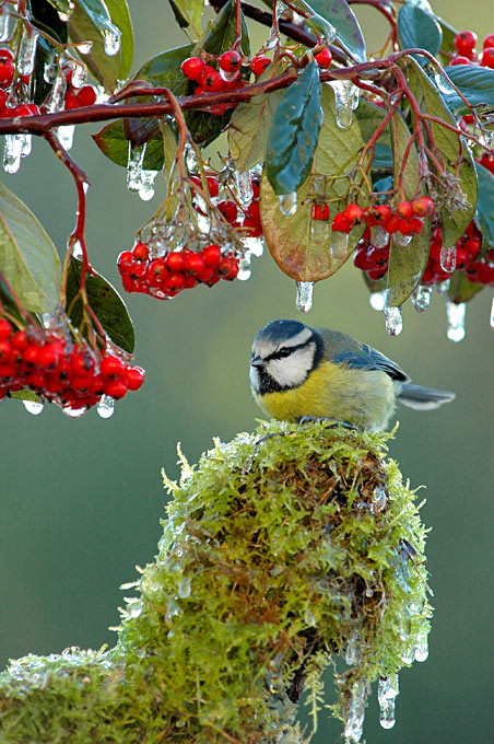 Superbes images d'oiseaux