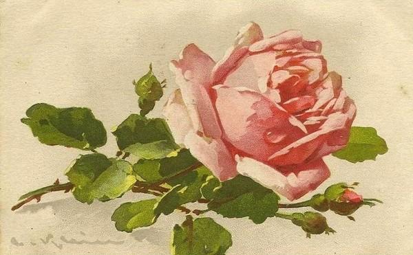 Cartes anciennes fleurs