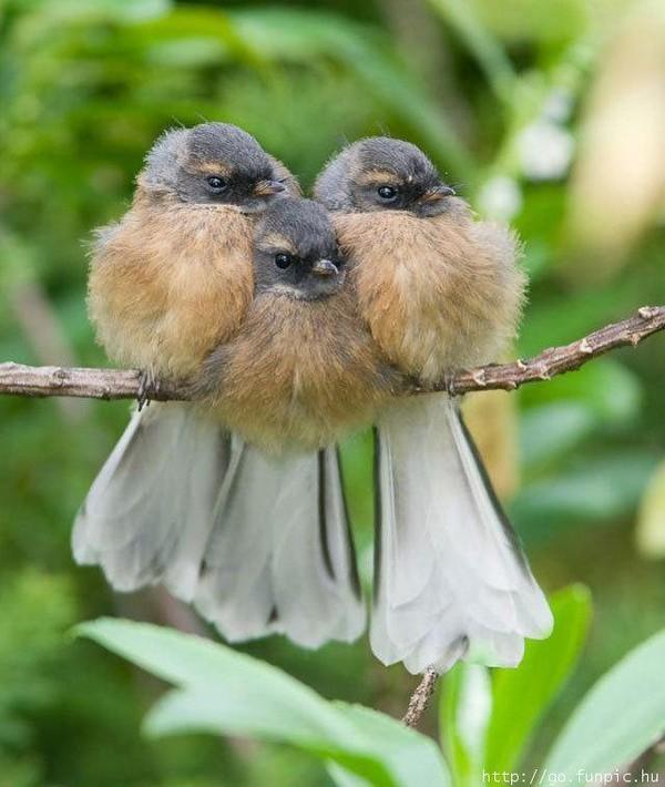 superbes images oiseau...