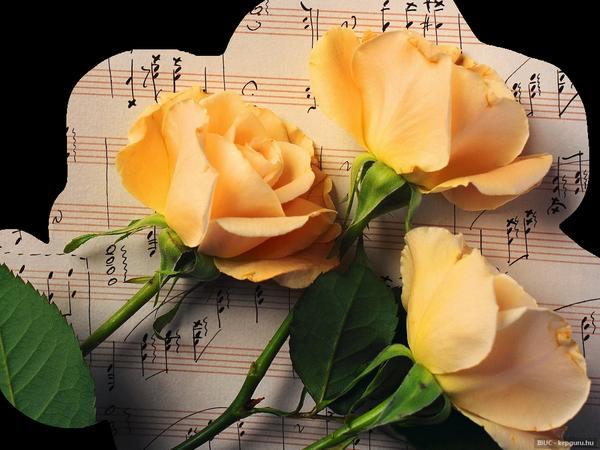 Jolies  roses