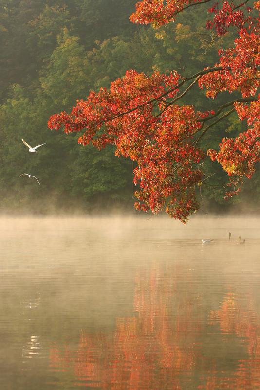 Paysages automne page 8 - Images d automne gratuites ...