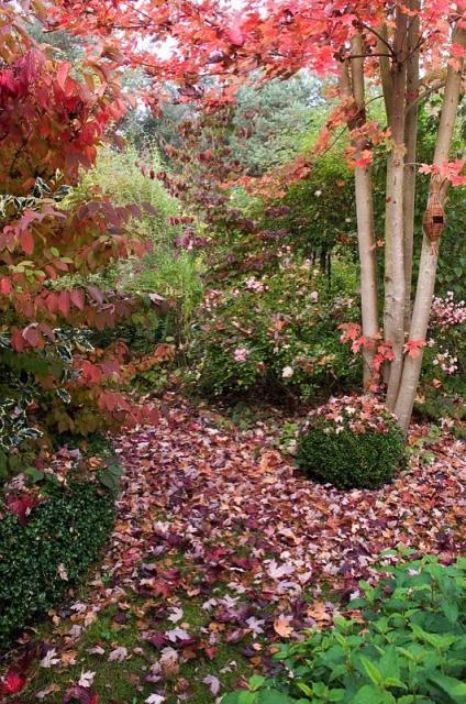 L 39 automne et ses couleurs page 4 - L automne et ses couleurs ...