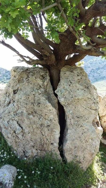 Favori nature et paysages insolites CH11
