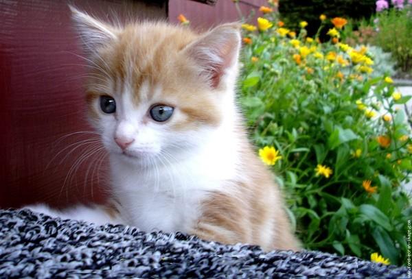 Gif et images de chats