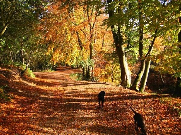 Best Dog Walk Forest Of Dean