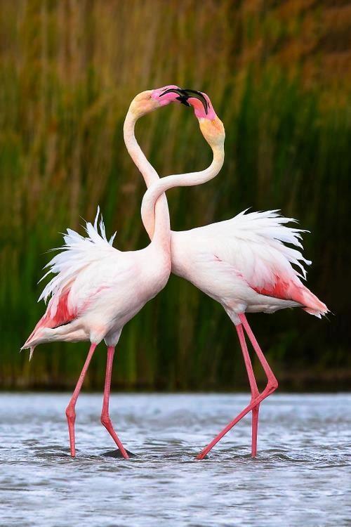 Sites ornithologiques B92f287b