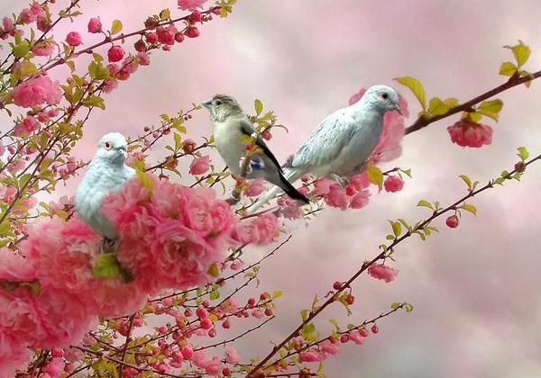 """Résultat de recherche d'images pour """"centerblog belles images d'oiseau"""""""
