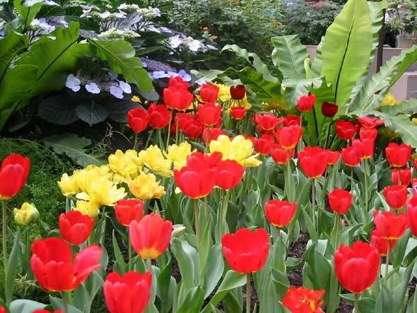 """Résultat de recherche d'images pour """"images fleurs de printemps"""""""