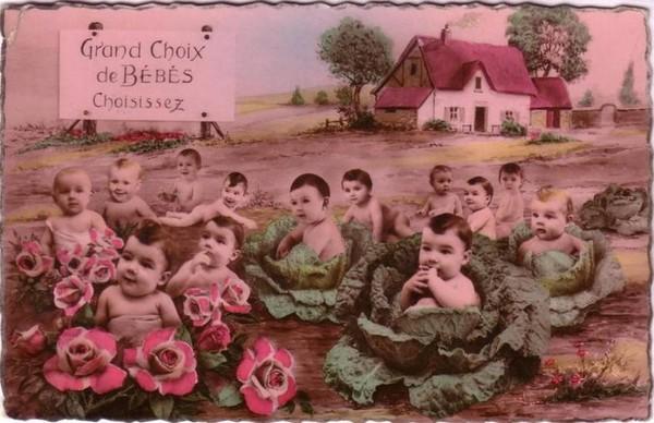 Bébés choux