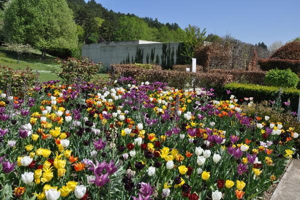 jardin fleuri - Jardin Fleuri