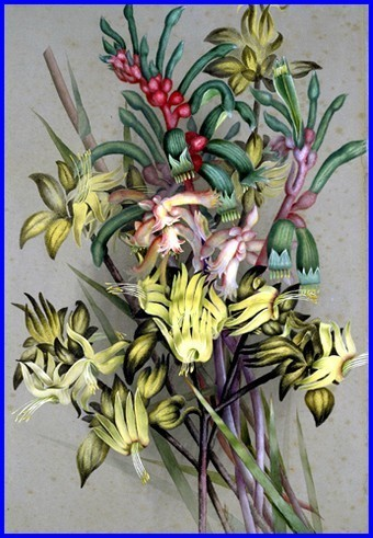 Marion Ellis Rowan peintre naturaliste