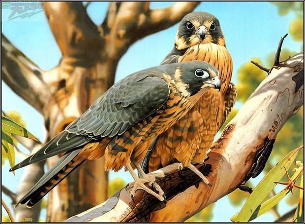 Oiseaux de Ego Guiotto