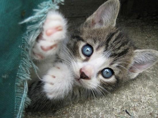 Gifs et images de chats