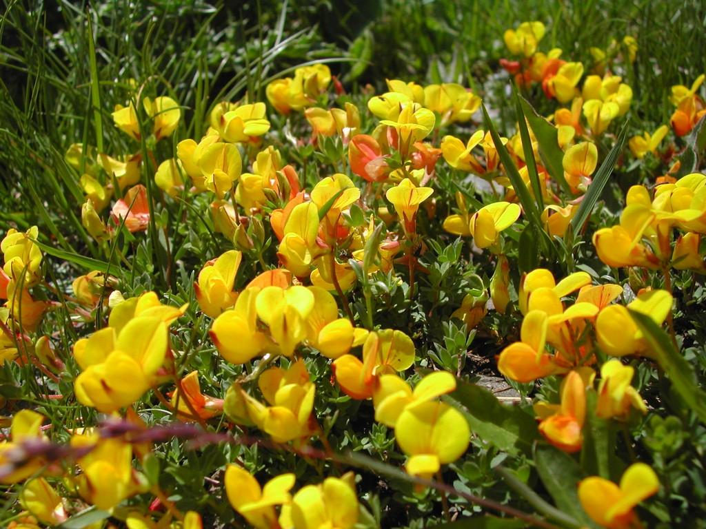 scenery spring pictures fleurs de printemps en montagne. Black Bedroom Furniture Sets. Home Design Ideas