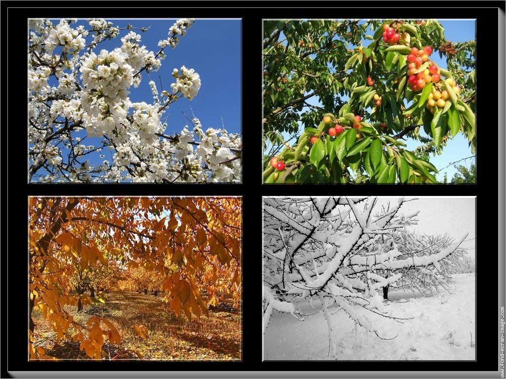 Les quatre saisons for Les jardins 4 saisons
