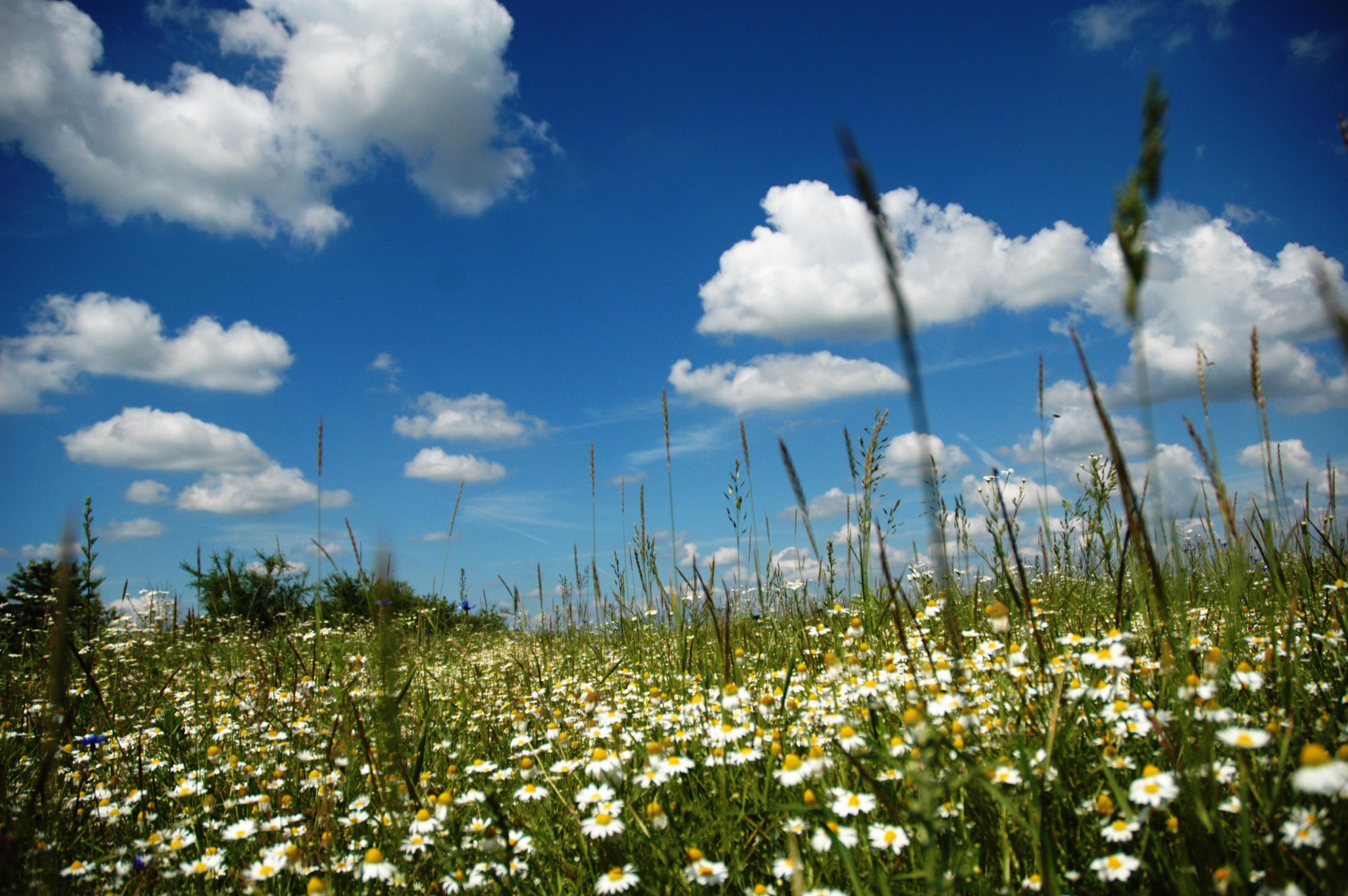 Paysages printemps ete page 55 for Fond ecran ete fleurs