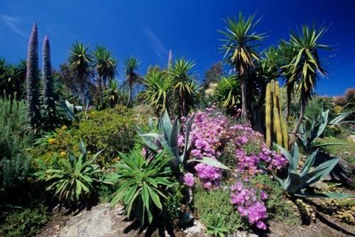 Jardin exotique roscoff - Le jardin exotique de roscoff ...