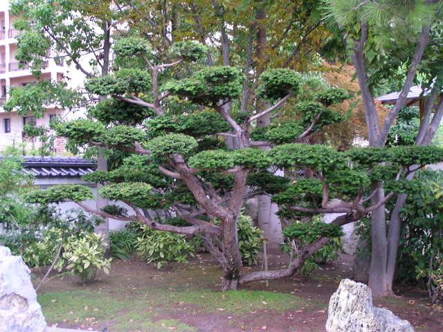 jardin japonais de monaco. Black Bedroom Furniture Sets. Home Design Ideas