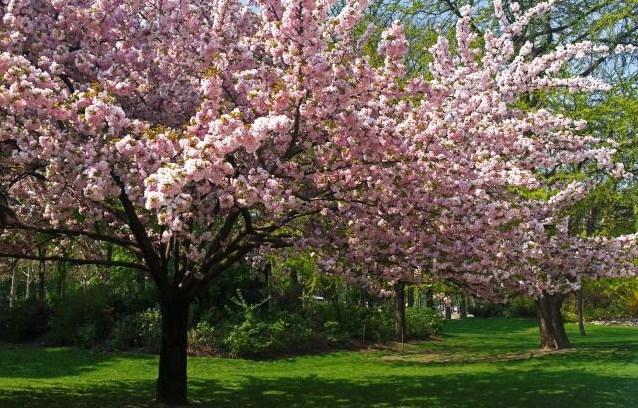 Peintre robert duncan for Images du printemps gratuites
