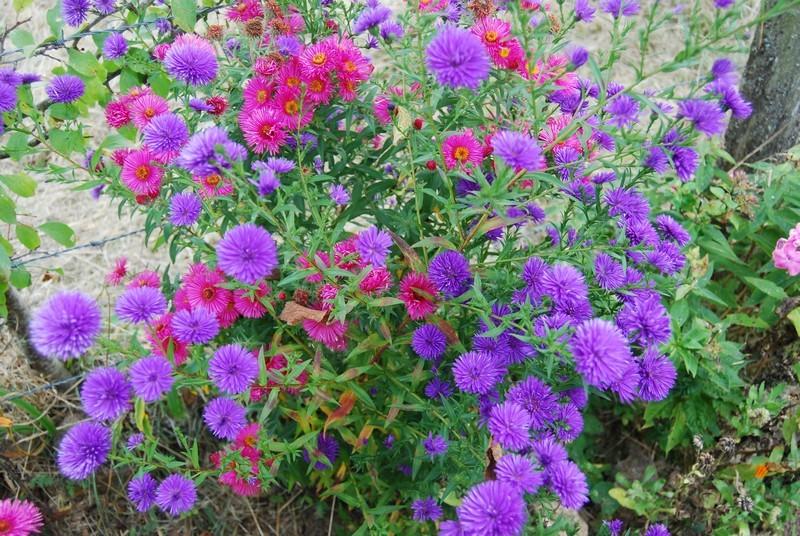 Automne et ses couleurs page 4 - L automne et ses couleurs ...
