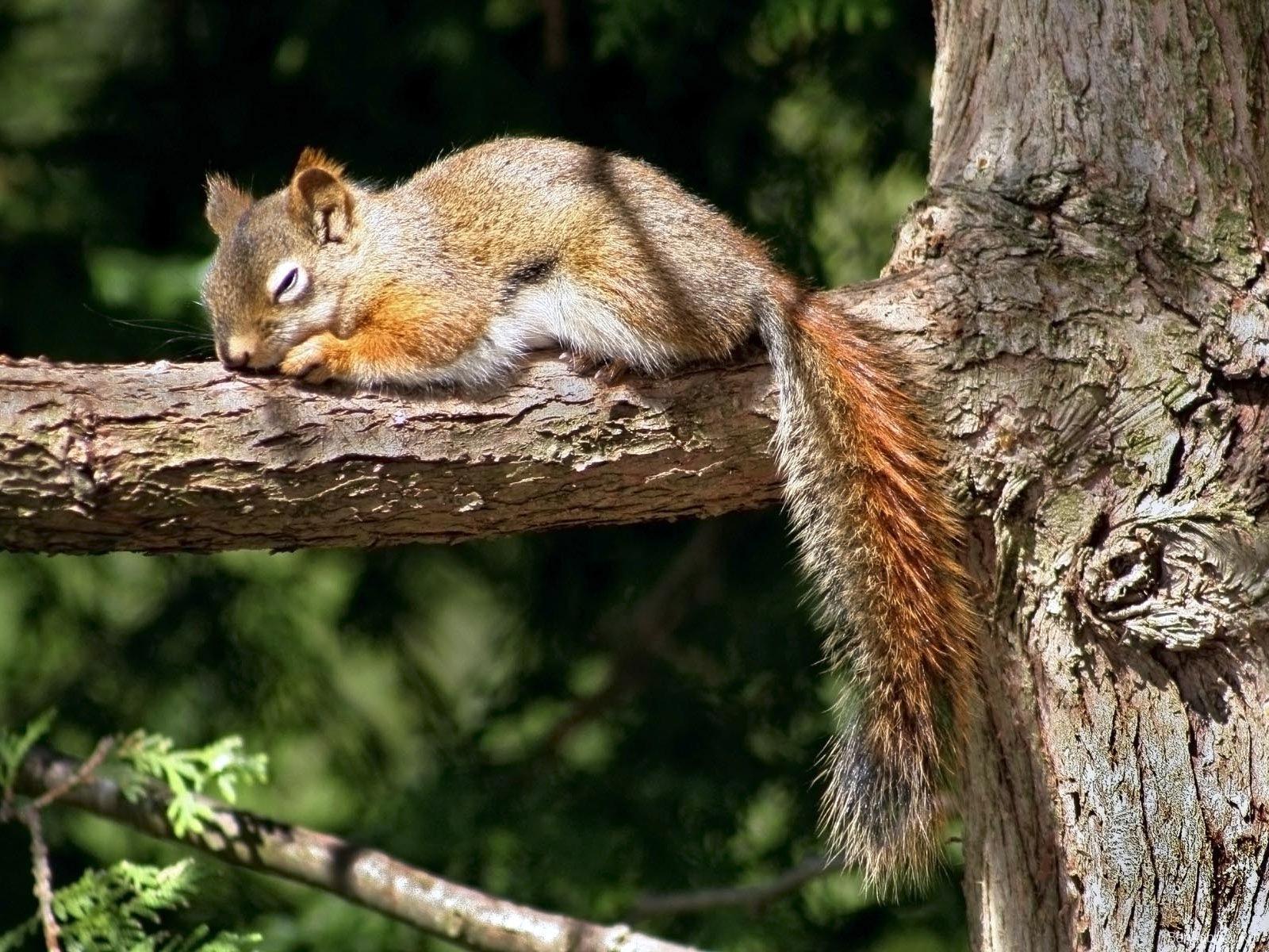 Belles images ecureuils page 2 for Dans html