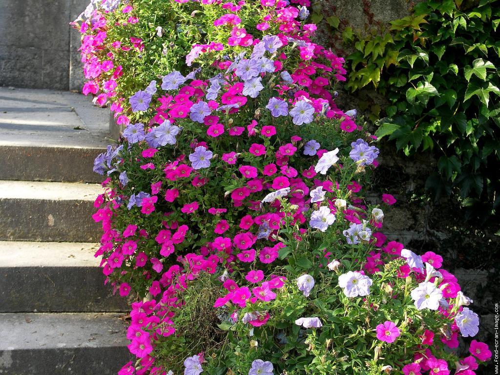 Paysages printemps ete page 11 for Plantes et arbustes de jardin